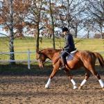 Ujeżdżanie konia późną jesienią