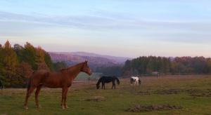 Konie pasące się na łące