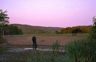 Konie na pastwisku w godzinach wieczornych