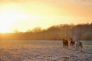 Konie na pastwisku na tle wschodzącego słońca